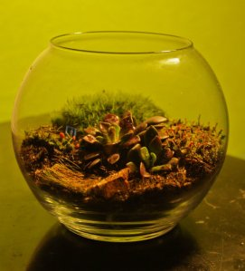 Desktop Companion Globe Terrarium. $20 Available at Zola Gallery, or on my Etsy store: https://www.etsy.com/listing/126168795/desktop-companion-globe-terrarium?ref=shop_home_active