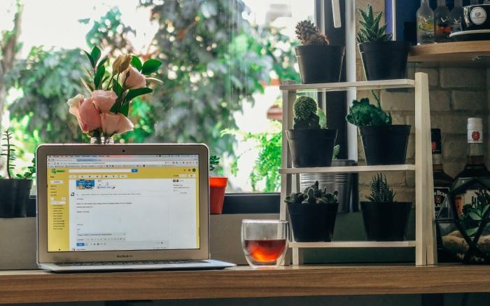 laptop_office_window_plants